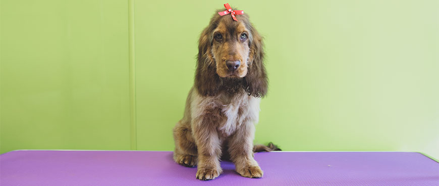 Dog Grooming Special Offers